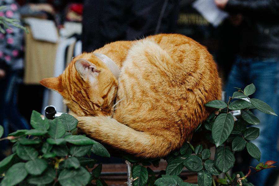 gato durmiendo en Estambul. Viaje a Turquía -Lena Karelova fotografía