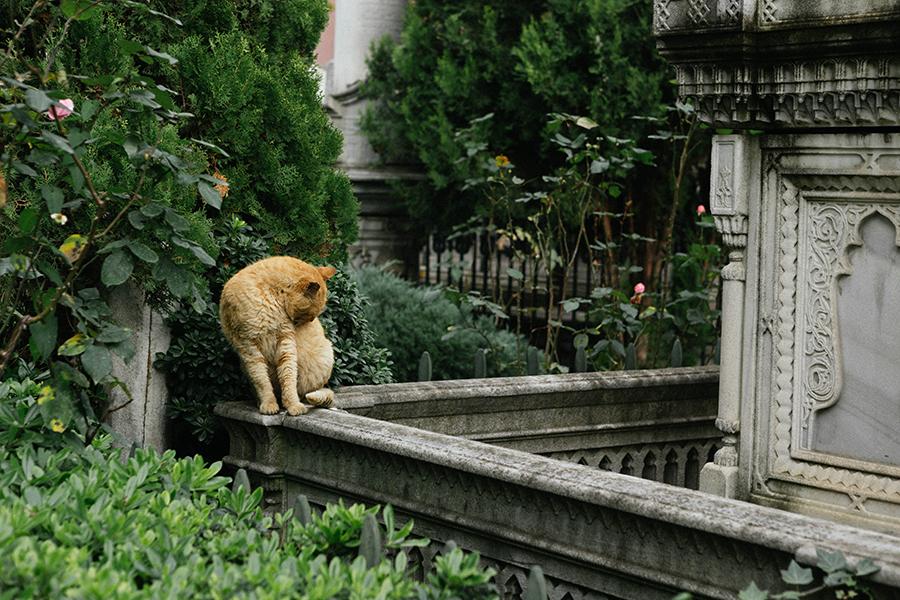 Gatos en Estambul, Lena Karelova fotografía de viajes.