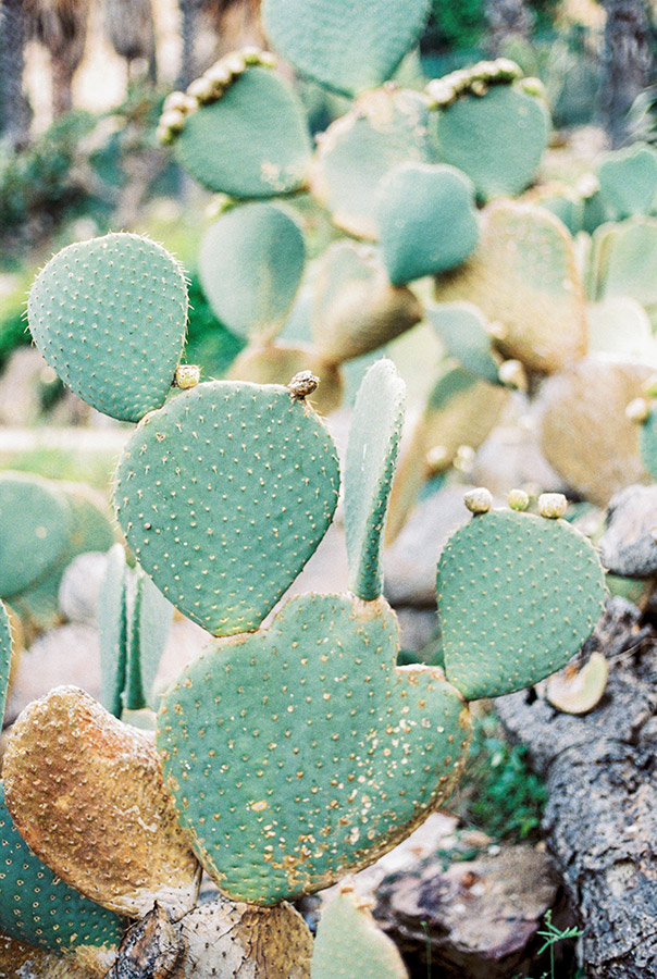 Cactus park Montjüic Barcelona| Barcelona engagement photographer | Film Wedding Photographer | Lena Karelova Photographer in Barcelona | Fine Art Photography